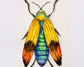 Jewel Beetle - Original Watercolor painting