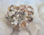 Pastel Seashell Jewelry Box Shell Trinket Keepsake Box