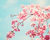"""Floral Photography - pink blue nursery aqua flower wall art print spring nature photo light picture pastel photograph, """"Spring Melody"""""""