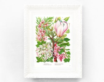6x9 Vintage Magnolia Botanical Print Encyclopedia Illustration Pink White Green Wildflower British Educational Learning flower botWF