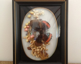 Vintage Butterfly Specimen In Glass Display Box