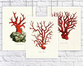 Large Red Coral Vintage Style Nautical Art Print Set of 3 Natural History Beach House