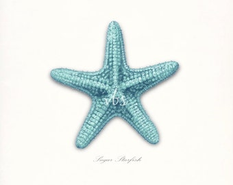 Coastal Decor Sea Shell - Sugar Sea Star Giclee Art Print 8x10 bright turquoise