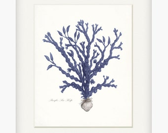 Coastal Decor Vintage Pacific Sea Kelp Giclee Art Print No. 3 8x10 Indigo Blue