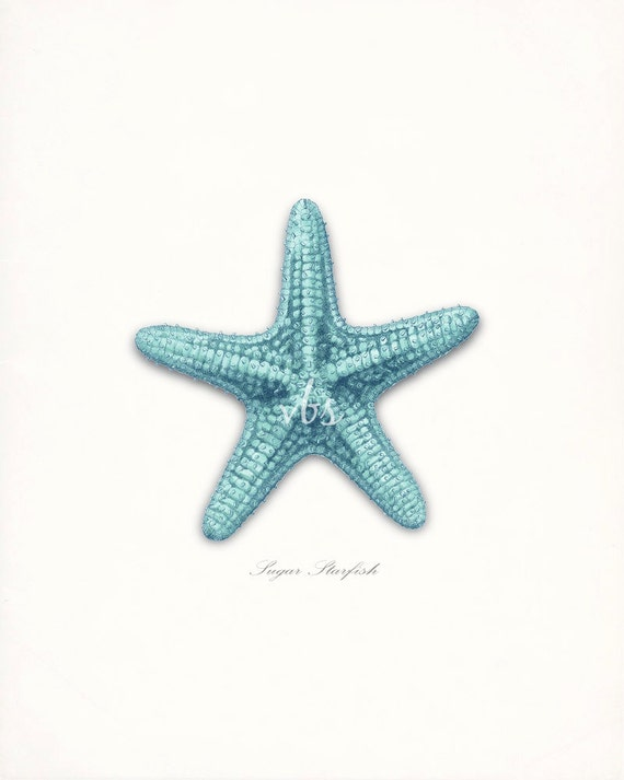 coastal decor sea shell sugar sea star by vintagebytheshore