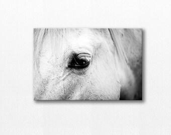 horse photography canvas black white photography 12x18 20x30 fine art photography equine white horse canvas print horse eye wall art gallery