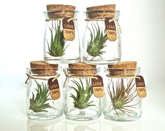 SALE Five 100% Love Cute Little Air Plant Habitats, Air Plant Glass Jar Terrariums, Glass Jar Air Plant Terrariums, Live Air Plants in Jars