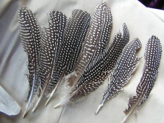 5 spotted guinea hen feathers Grade B, loose feathers, black and white quill, wholesale lot