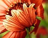 Rust Orange Flower Photo, 10x10 print, Rust Orange, Forest Green, Vintage, square print, Autumn Fall Rustic flower, orange rust fall