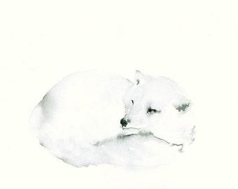 Snow Fox Watercolor Fine Art Print
