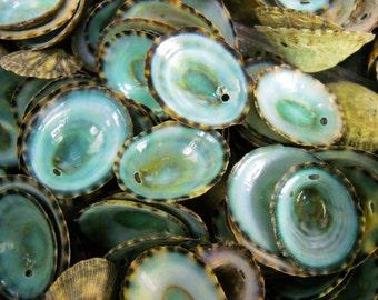 "Multipack .75""-1"" DRILLED green limpet shells seashell ocean beach nautical Hawaiian coastal decoration"