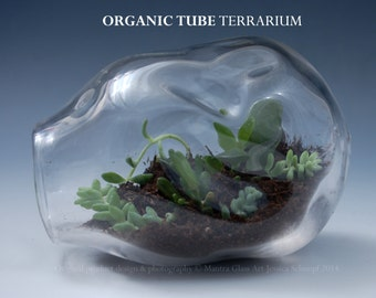 Terrarium SALE, Glass Terrarium, Recycled Glass Terrarium, Organic Succulent Garden, Desktop Terrarium