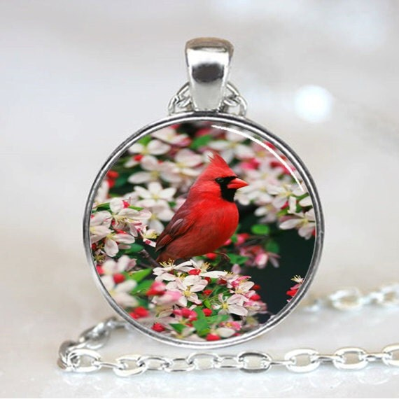 Male Northern Cardinal among Crabapple Blossoms, Cardinal  Photo Necklace, Silver (PD0225)