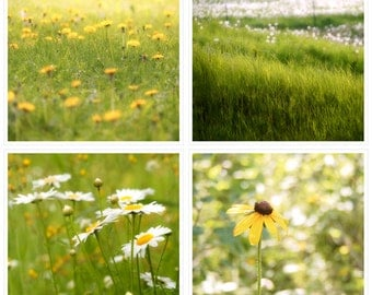 Save on this Country Print Set, 30% Savings, Yellow and Green, Flowers and Field, Country Life, Dandelions, Brown Eyed Susan, Daisies