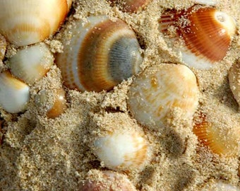 Sea Shells Fine Art Photograph