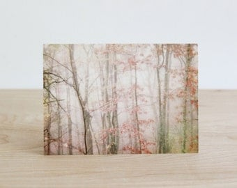 Forest nature photography all occasion greeting cards or invitations, four pack of pink blank note cards