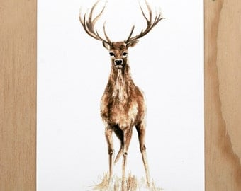 Stag - a Woodland Beastie print