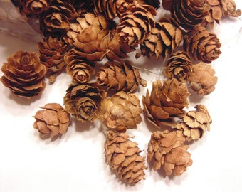20 piece small to tiny pine cone mix, 20-30 mm (R8)
