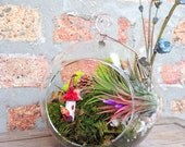 Colorful Fairy House Air Plant Terrarium - A Unique Mothers Day Gift or Birthday Gift