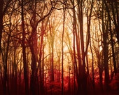 Fall Photography, landscape, red forest, fog, woodland, autumn, rustic, mist, trees, red decor, nature, fPOE