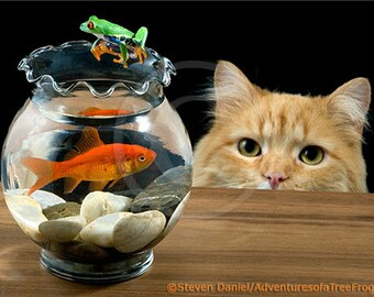 Frog Art, Fish & Cat, Cute Cat, 8x10, Kitten, Wall Art