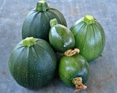 Round Zucchini Tondo Di Piacenza Summer Squash Italian Heirloom Seeds Non-GMO Naturally Grown Open Pollinated Gardening