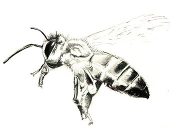 "HoneyBee Print: digital print of an original drawing available 5x7"" or 8x10"""