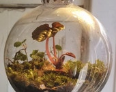 Moss Terrarium Globe Ornament: A Living Miniature World