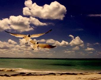 "Fine Art Photographic Print  ""Gulf Seagulls"""