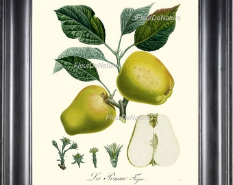 BOTANICAL FRUIT PRINT Poiteau 8x10 Botanical Art Print 33 Beautiful French Apple Chart Spring Summer Garden Plant to Frame Antique Writing