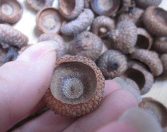 100 Acorn tops. Natural DIY supplies Oak Tree Acorn tops  lot of 100