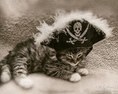 Long Haired Tabby Kitten with Pirate Hat Vintage Look 5 x 7 Photographic Print