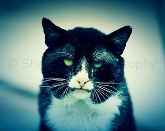 Evil Cat - Halloween Decor - Black Cat Photography - Creepy Cat - Halloween Cat Art - Dramatic Photo - Goth Photography - Goth Home Decor