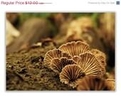 Mushroom Photograph - Nature Print - 5x7 Fine Art Photography
