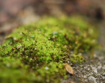 Moss on Concrete photograph