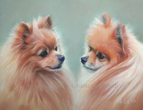 Pomeranian Fine Art Print