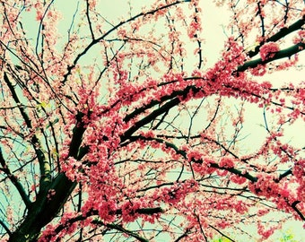 Western Redbud - Early Spring Flowers - Flowering Tree Art - Nature Art - Wall Decor - Nature Flower Photograph