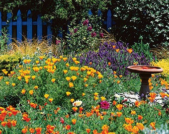 Cottage flower mix,73, gardening , flower seeds, mix flower seeds, wild flower mix,