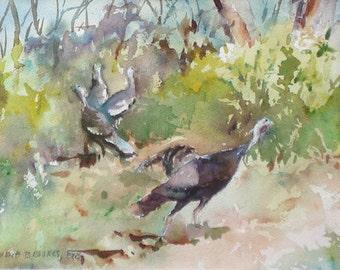 Wild Turkeys 1