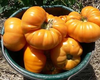 Organically Grown, non-GMO, Heirloom Amana Orange Tomato Seeds