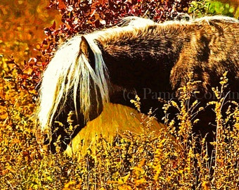 "Horse print on canvas: wild horse print pony with long mane autumn horse autumn 11x15"" canvas"