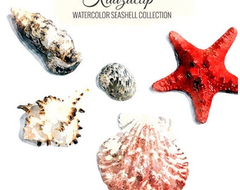 Watercolor Seashell Collection - Commercial and Personal Use