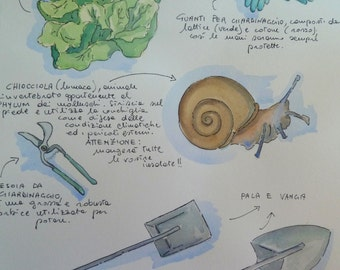 The snail and salad table illustrated with descriptions. SCONTO 5 EURO!!