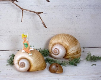 9 Fairy Garden Snails-Recyclers of the Fairy Universe.  Florida Shells for Terraniums, Still Life Arrangements, Nature Decor, Party Decor.