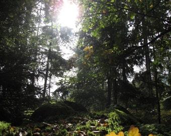 Photo taken in Sweden, Ryd, fall