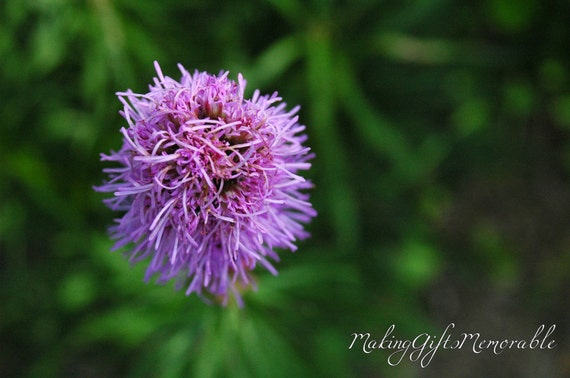 Purple Flower Photograph That Can Be Personalized