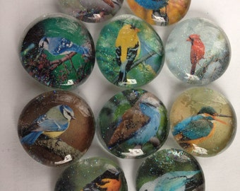Colorful bird glass magnets. Set of 6 One half inch round or one inch round bird magnets in a variety of colors