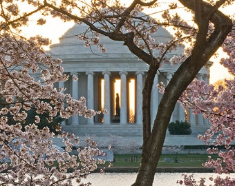 """Jefferson Memorial & Cherry Blossoms 2: 7""""x10"""" archival print signed and matted in 11""""x14"""" matte"""