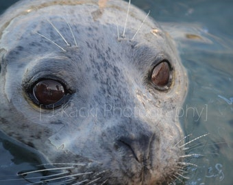 SEAL FACE, Vancouver Island, Sooke Harbour