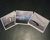 Antarctica Series - Set of 6 Cards - FREE Shipping